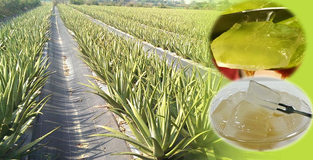 自然無毒農產品系列
